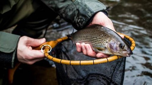 Tenkara UK Grayling.jpg